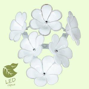 Накладной светильник Lussole Asinara GRLSA-5101-01